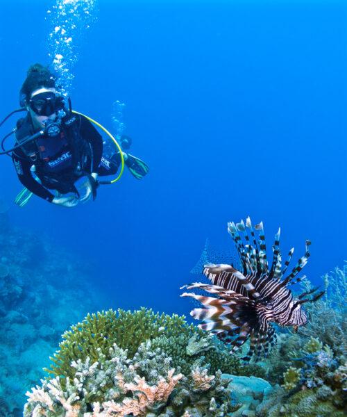 Plongeuse_Mayotte_OBulles
